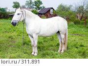 Купить «Белая лошадь», фото № 311891, снято 29 мая 2008 г. (c) Елена Блохина / Фотобанк Лори