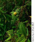 Купить «Желтая улитка на зеленом листе крапивы», фото № 312967, снято 13 февраля 2005 г. (c) Sergey Toronto / Фотобанк Лори