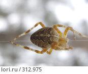 Купить «Страшный паук на нитке паутины», фото № 312975, снято 4 августа 2007 г. (c) Sergey Toronto / Фотобанк Лори