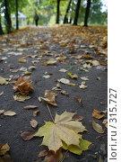 Купить «Листопад», фото № 315727, снято 28 сентября 2007 г. (c) Gagara / Фотобанк Лори