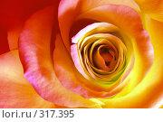 Роза. Стоковое фото, фотограф ElenArt / Фотобанк Лори