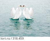 Купить «Два белых лебедя», фото № 318459, снято 11 мая 2006 г. (c) Анатолий Заводсков / Фотобанк Лори