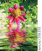 Купить «Бабочка на цветке с отражением в воде», фото № 318515, снято 31 августа 2004 г. (c) Анатолий Заводсков / Фотобанк Лори