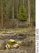Спиленные деревья в полосе лесозачистки. Стоковое фото, фотограф Александр Иванов / Фотобанк Лори
