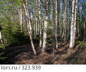 Купить «Весенний лес. Берёзы», фото № 323939, снято 18 ноября 2019 г. (c) VPutnik / Фотобанк Лори