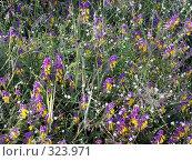 Купить «Луговые цветы», фото № 323971, снято 9 июля 2004 г. (c) VPutnik / Фотобанк Лори