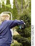Купить «Стрижка дерева в саду», фото № 325427, снято 25 апреля 2008 г. (c) Игорь Шаталов / Фотобанк Лори