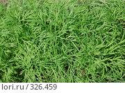 Купить «Зеленые листья петрушки», фото № 326459, снято 12 июня 2008 г. (c) Иван Авдеев / Фотобанк Лори