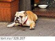 Купить «Серьезный пес», фото № 328207, снято 27 июня 2007 г. (c) Павел Коновалов / Фотобанк Лори