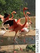 Купить «Розовые фламинго в Московском зоопарке», эксклюзивное фото № 328267, снято 18 июня 2008 г. (c) Журавлев Андрей / Фотобанк Лори