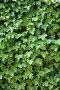 Фон горизонтальный. Листья, эксклюзивное фото № 328867, снято 10 мая 2008 г. (c) Татьяна Лата / Фотобанк Лори