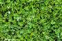 Трава, фото № 329047, снято 23 июля 2017 г. (c) Парушин Евгений / Фотобанк Лори