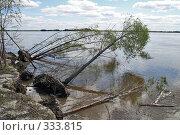 Купить «Подмытые половодьем деревья», фото № 333815, снято 5 июня 2008 г. (c) Круглов Олег / Фотобанк Лори