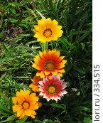 Купить «Яркие цветы. Гацания», фото № 334515, снято 11 июня 2008 г. (c) Юлия Подгорная / Фотобанк Лори