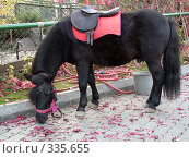 Купить «Пони», фото № 335655, снято 2 октября 2005 г. (c) sav / Фотобанк Лори