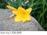 Цветок на камне. Стоковое фото, фотограф Гордиенко Данил / Фотобанк Лори