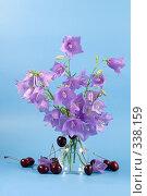 Купить «Букет колокольчиков», фото № 338159, снято 26 июня 2008 г. (c) Елена Блохина / Фотобанк Лори