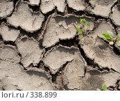 Купить «Фон. Растрескавшаяся земля.», фото № 338899, снято 26 марта 2019 г. (c) Ivan Markeev / Фотобанк Лори