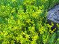 Участок .альпийской горки, фото № 339203, снято 29 мая 2008 г. (c) Людмила Жмурина / Фотобанк Лори