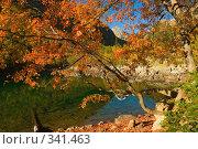 Красные листья клена осенью в горах Кавказа на фоне гор и озера. Тебердинский заповедник. Стоковое фото, фотограф Алексей Бок / Фотобанк Лори
