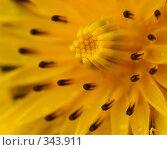 Цветочная абстракция, фото № 343911, снято 12 июня 2008 г. (c) Игорь Семенов / Фотобанк Лори