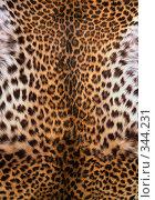Шкура леопарда. Стоковое фото, фотограф Морозова Татьяна / Фотобанк Лори