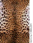 Купить «Шкура леопарда», фото № 344231, снято 3 мая 2008 г. (c) Морозова Татьяна / Фотобанк Лори