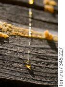 Купить «Капли смолы на деревянной стене», фото № 345227, снято 3 июля 2008 г. (c) Werin / Фотобанк Лори