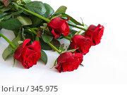 Купить «Розы на белом фоне», фото № 345975, снято 2 сентября 2007 г. (c) Андрей Рыбачук / Фотобанк Лори