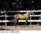 Таганрог. Лошадь в загоне. Центральный парк. Стоковое фото, фотограф Фиронов Максим / Фотобанк Лори