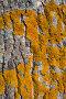 Текстура коры тополя с мхом, фото № 346671, снято 21 января 2017 г. (c) Александр Fanfo / Фотобанк Лори