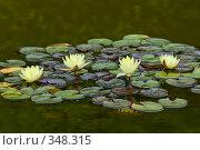 Купить «Кувшинка или водяная лилия.Дендрарий города Сочи.», фото № 348315, снято 3 июля 2008 г. (c) Федор Королевский / Фотобанк Лори