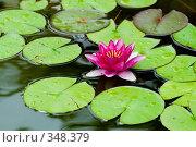 Купить «Кувшинка или водяная лилия. Дендрарий города Сочи.», фото № 348379, снято 3 июля 2008 г. (c) Федор Королевский / Фотобанк Лори