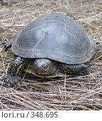 Купить «Речная черепаха на сене», фото № 348695, снято 4 июля 2008 г. (c) Игорь Муртазин / Фотобанк Лори