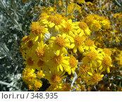 Купить «Желтые цветы», фото № 348935, снято 23 июня 2008 г. (c) Евгения Лаврова / Фотобанк Лори