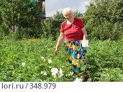 Купить «Поиск колорадских жуков на картошке», фото № 348979, снято 5 июля 2008 г. (c) Донцов Евгений Викторович / Фотобанк Лори