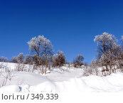 Купить «Полярная зима», фото № 349339, снято 9 марта 2008 г. (c) Максим Купрацевич / Фотобанк Лори