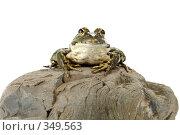 Купить «Лягушка», фото № 349563, снято 7 июля 2008 г. (c) Goruppa / Фотобанк Лори