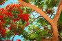 Тропические деревья, фото № 350583, снято 16 мая 2007 г. (c) Losevsky Pavel / Фотобанк Лори