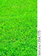 Купить «Зеленая лужайка», фото № 354175, снято 26 марта 2019 г. (c) Роман Сигаев / Фотобанк Лори