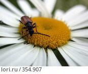 Купить «Жук на цветке», фото № 354907, снято 30 июня 2007 г. (c) sav / Фотобанк Лори