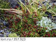 Купить «Цветы Камчатки», фото № 357923, снято 12 августа 2004 г. (c) Оглоблин Андрей Николаевич / Фотобанк Лори