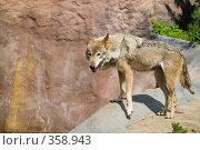 Купить «Серый волк», фото № 358943, снято 2 июля 2008 г. (c) Михаил Крекин / Фотобанк Лори