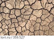 Купить «Сухая земля», фото № 359527, снято 15 июля 2008 г. (c) Юрий Пономарёв / Фотобанк Лори