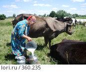 Купить «Доярка  процеживает молоко на фоне стада коров», фото № 360235, снято 11 июля 2007 г. (c) Галина  Горбунова / Фотобанк Лори