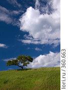 Купить «Сосна на фоне июльского неба», фото № 360663, снято 28 июня 2008 г. (c) Юрий Назаров / Фотобанк Лори