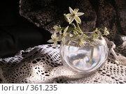 Купить «Букет», фото № 361235, снято 21 июня 2008 г. (c) Омельян Светлана / Фотобанк Лори