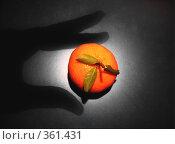 Желанный плод. Стоковое фото, фотограф Светлана Кудрина / Фотобанк Лори
