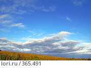 Купить «Высокое небо», фото № 365491, снято 18 июля 2008 г. (c) Анатолий Теребенин / Фотобанк Лори