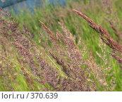 Купить «Трава. Фон», фото № 370639, снято 11 июля 2007 г. (c) sav / Фотобанк Лори